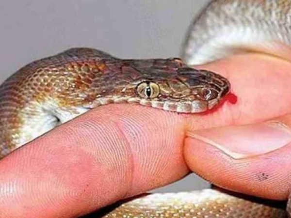 Mơ bị rắn cắn là điềm dữ hay lành, có liên quan đến cặp số nào?