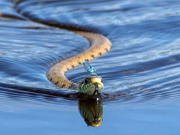 Giải mã bí ẩn giấc mơ thấy rắn - Đi tìm những cặp số liên quan