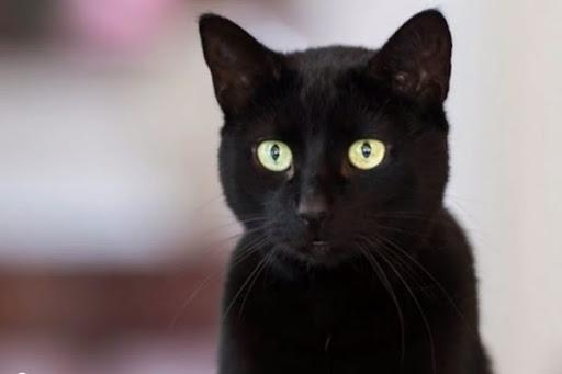 Mơ thấy con mèo đen vào nhà